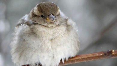 pticam holodno